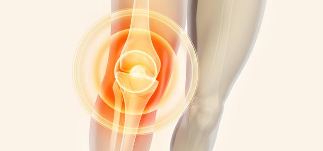 膝関節の解剖を画像を用いて解説!どんな骨や筋肉・靭帯があるの?